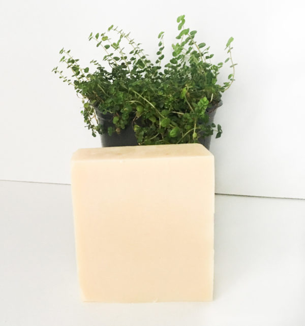 A creamed honey colored square shape bar cleanser with a small succulent behind the bar surrounded by a white background